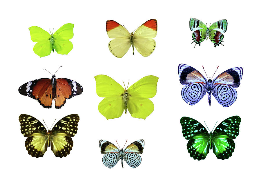 Isolated Butterflies Photograph by Imv