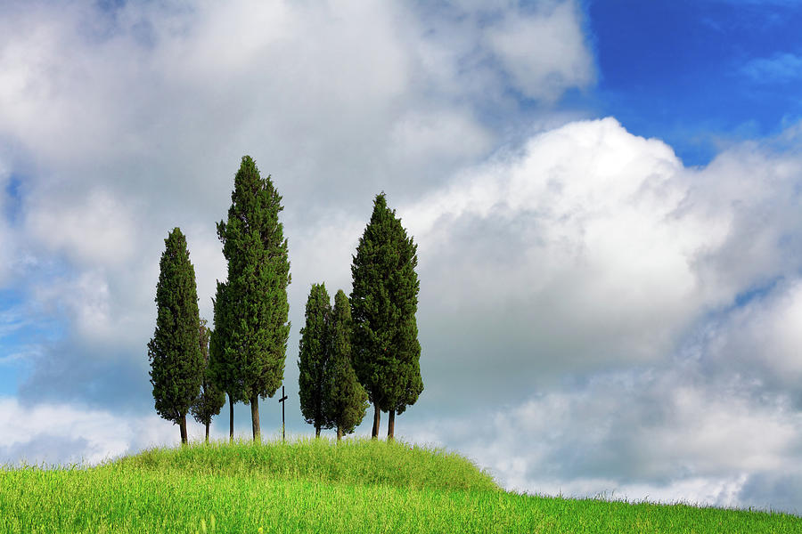 Italian Cypresses In The Spring Photograph by Mammuth