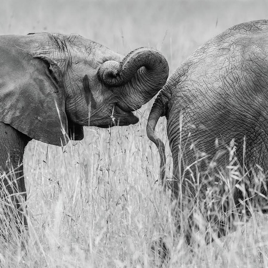 Elephant Photograph - Itrunk by Mohammed Alnaser
