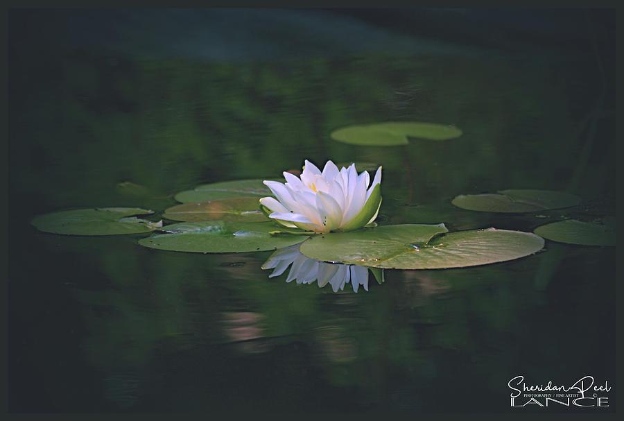 Its A Beauty by Lance Sheridan-Peel