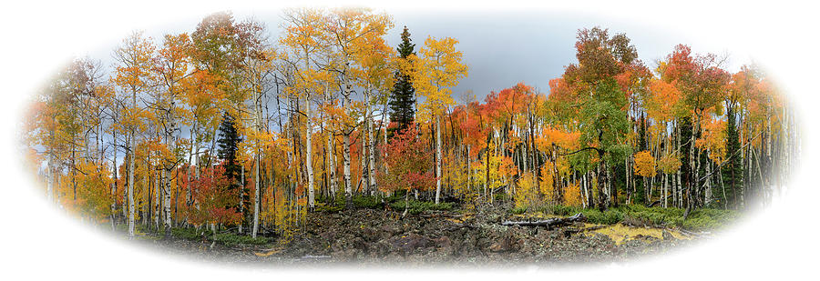 It's all about the Trees by Michael Monahan