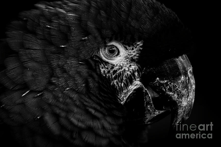 Parrot Photograph - Its In The Eyes by Blair Howell