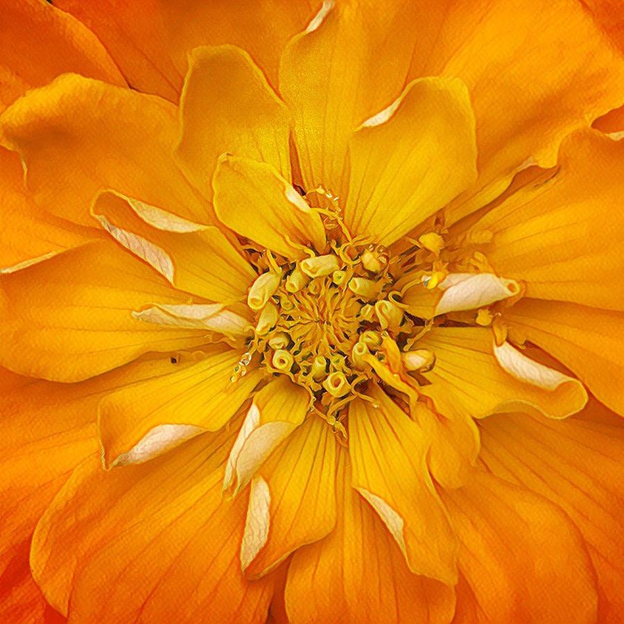 I've Got Sunshine by Cindy Greenstein