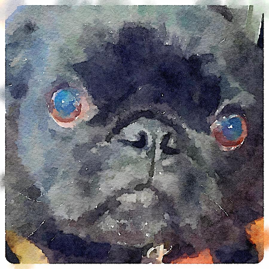 Pug Painting - Izzy Pug by Karen Jordan
