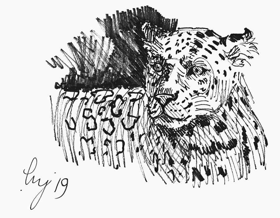 Jaguar drawing - black and white big cat illustration by Mike Jory
