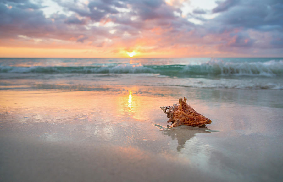 Jamaica, Conch Shell On Beach Photograph by Tetra Images