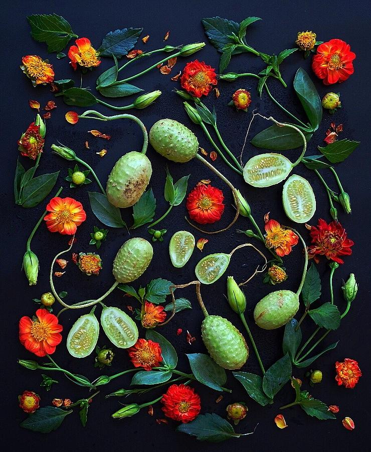 Jamaican Burr Cucumbers by Sarah Phillips