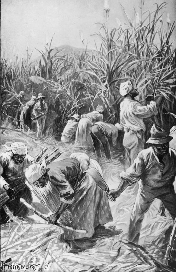Jamaican Cane Cutters Photograph by Hulton Archive