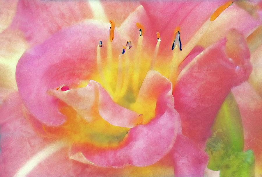 Jane's Lily by Gordon Ripley