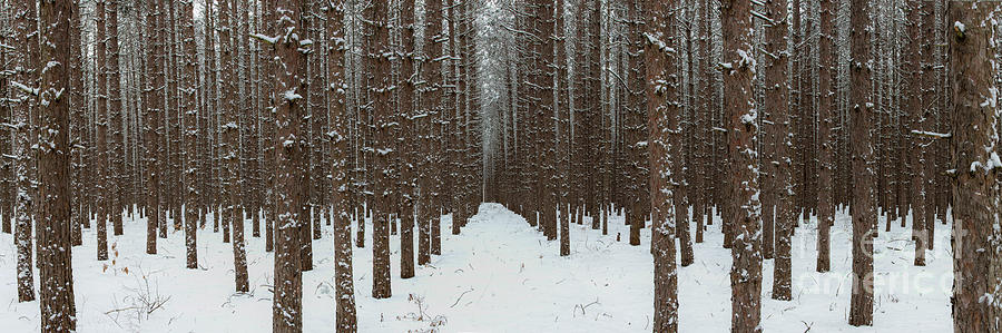 Sleeping Bear Dunes Photograph - January Forest by Twenty Two North Photography
