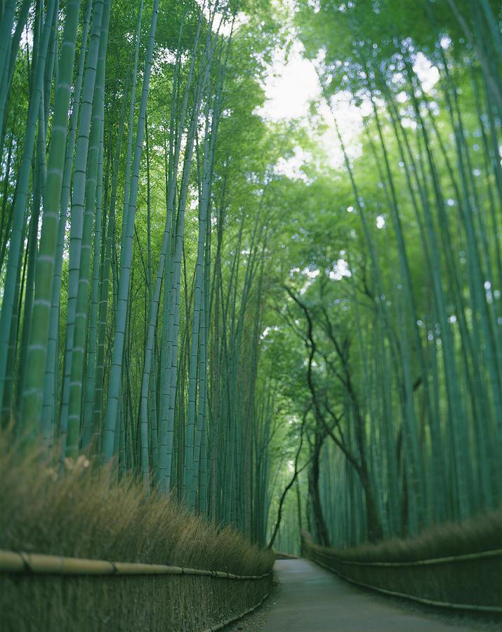 Japan, Kyoto, Arasi-yama, Road Passing Photograph by Michael H