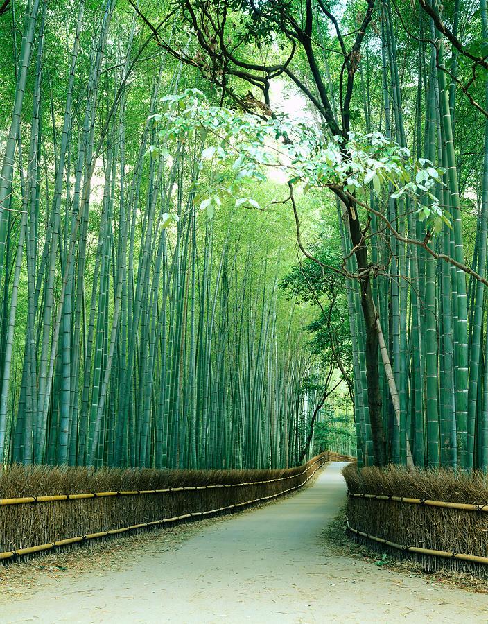 Japan, Kyoto Prefecture, Ukyo Ward Photograph by Akira Kaede