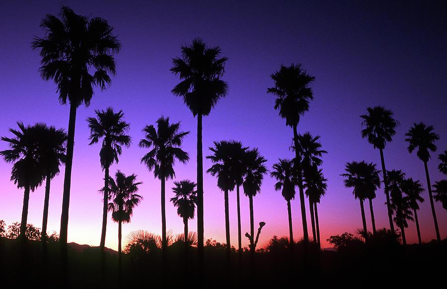 Japan, Kyushu, Miyazaki, Sunset With Photograph by John Seaton Callahan