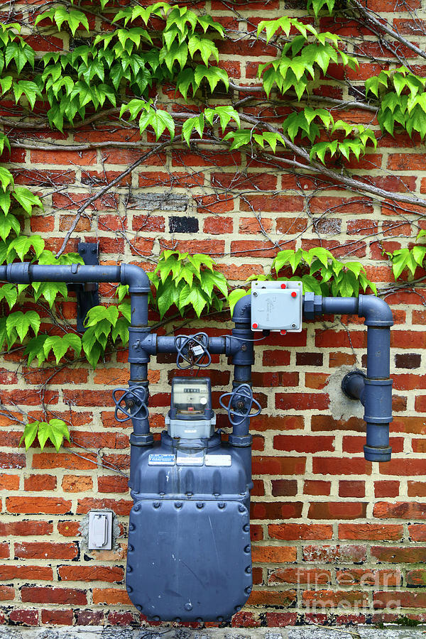 Japanese Creeper and Gas Meter by James Brunker