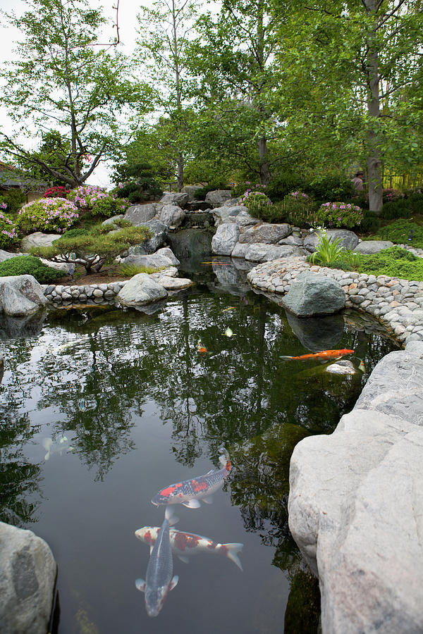 Landscape Photograph - Japanese Friendship Garden by Meltonmedia