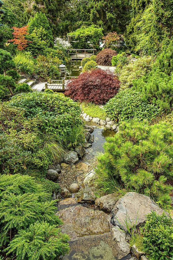 Japanese Garden-2 by Claude Dalley