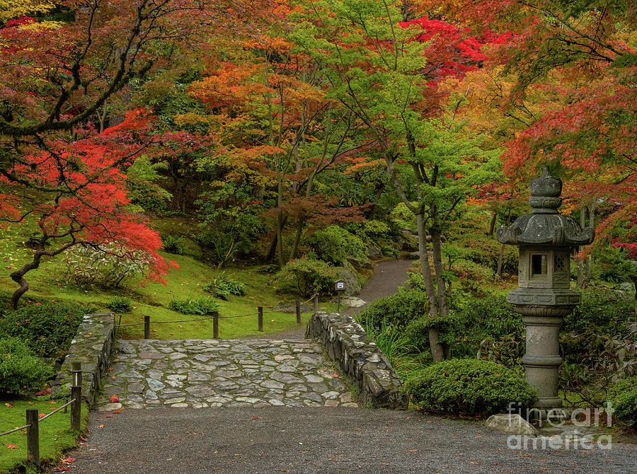 Japanese Garden Bridge In The Fall Photograph