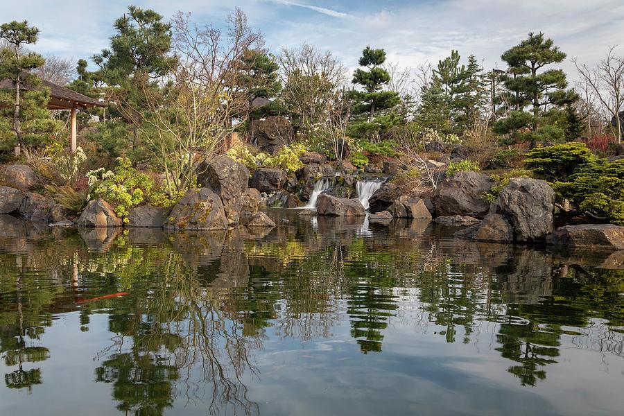 Japanese Garden by Catherine Avilez