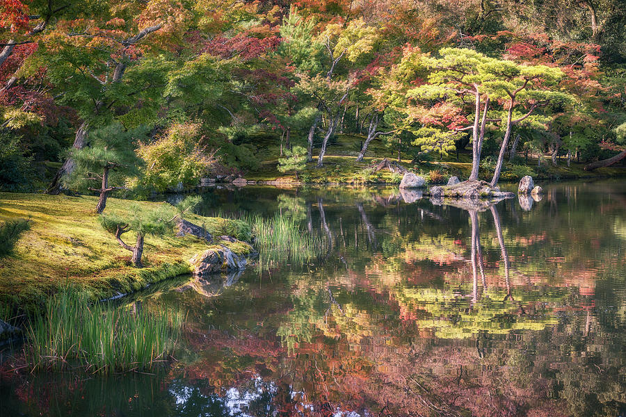 Japanese Garden, colorful in autumn in Kyoto. by Daniela Constantinescu