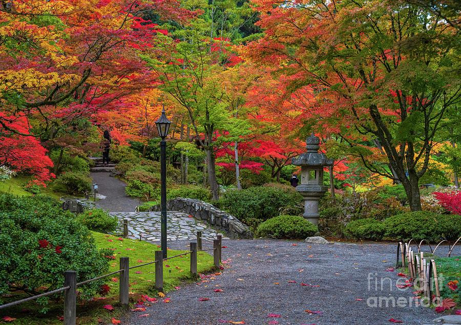 Japanese Garden Falls Fiery Palette Photograph