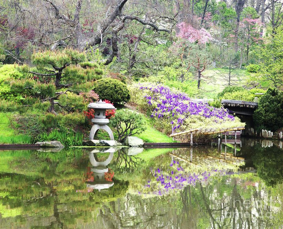 Japanese Lantern Reflection by Steve Edwards