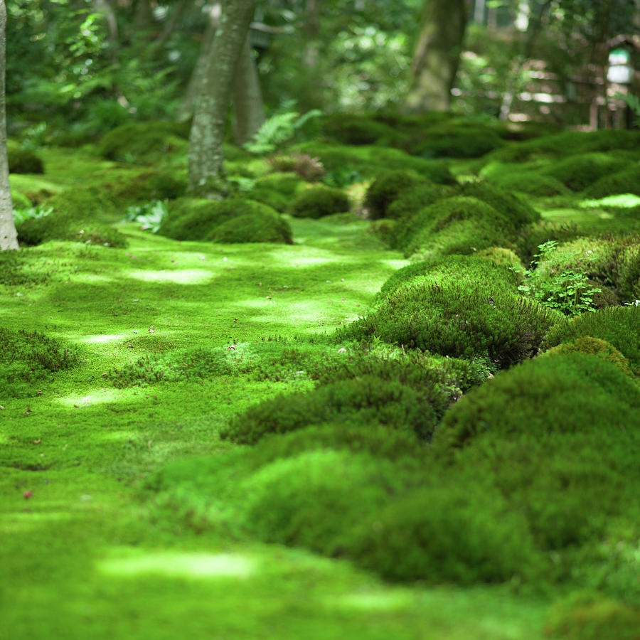 Japanese Moss Garden, Kyoto Photograph by Ippei Naoi