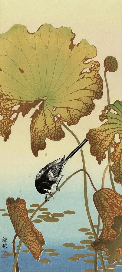 Wagtail Painting - Japanese Wagtail On Lotus Plant, 1936 by Ohara Koson