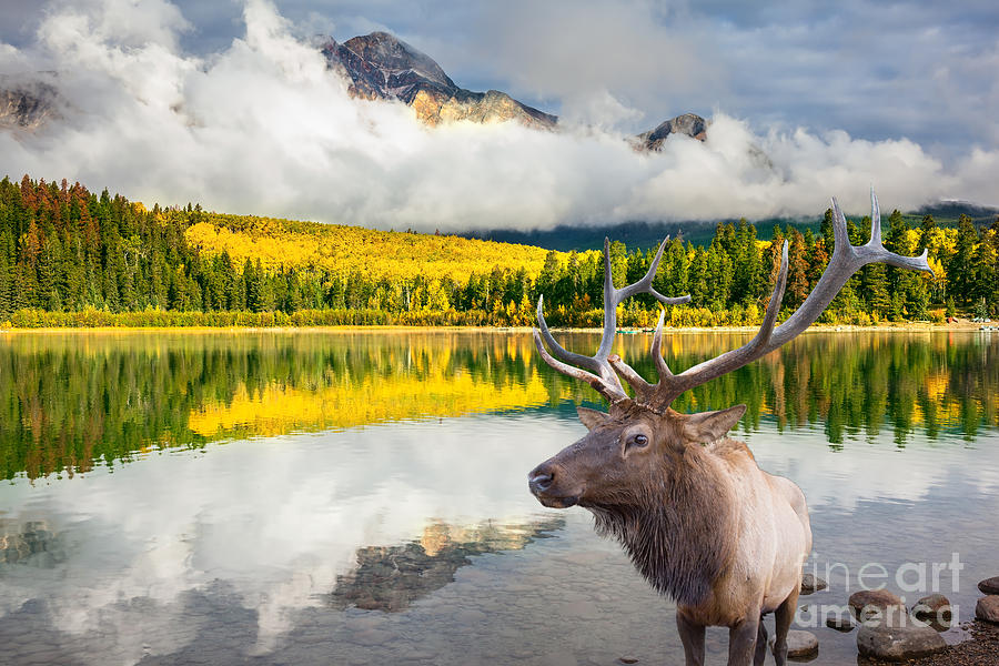 Deer Photograph - Jasper National Park In The Rocky by Kavram