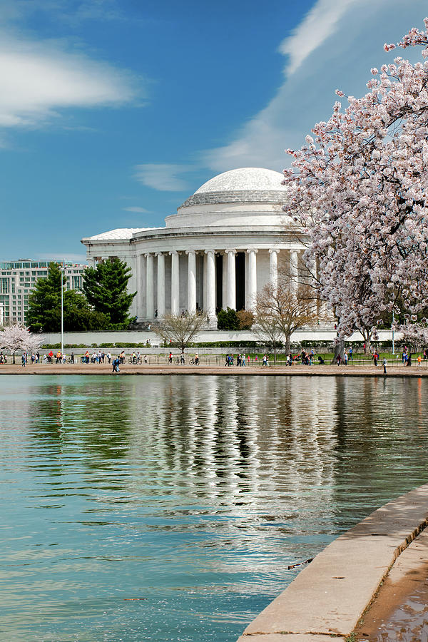 Jefferson Blossoming by Greg Fortier