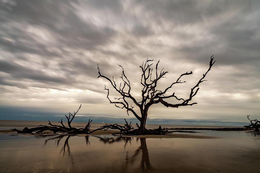 Jekyll Tree by Joye Ardyn Durham