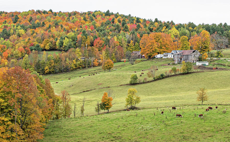 Jenne Farm In Reading Vermont Photograph By Scott Miller