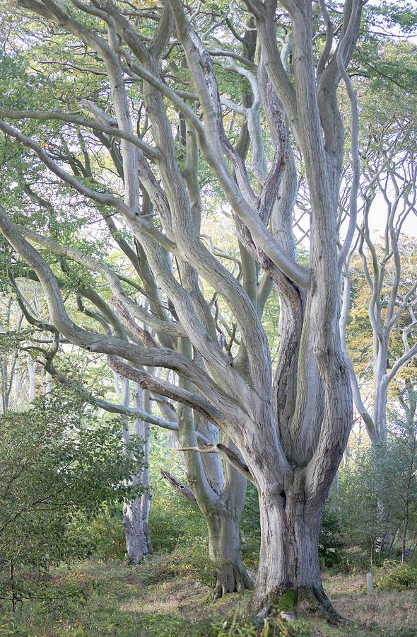 Jenny's Tree by Anita Nicholson