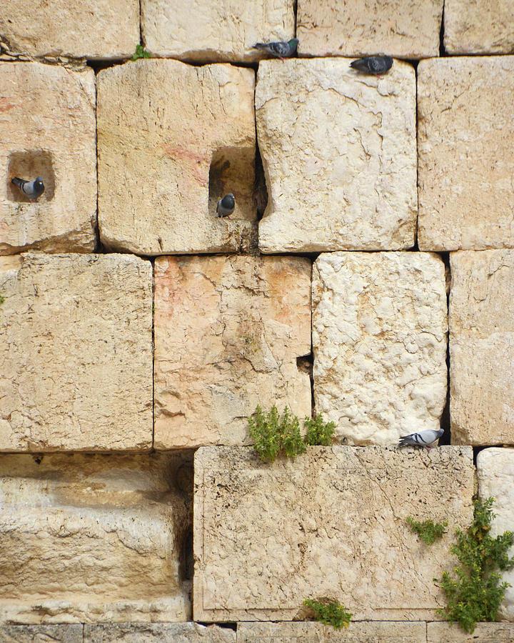 Jerusalem Western Wall Residents - 2 by Alex Vishnevsky