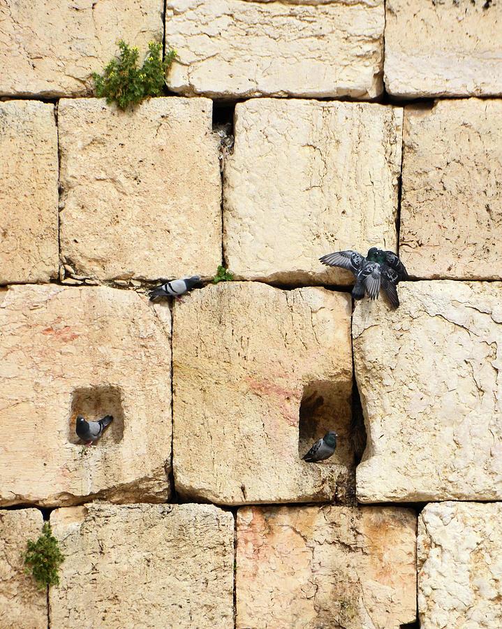 Jerusalem Western Wall Residents by Alex Vishnevsky