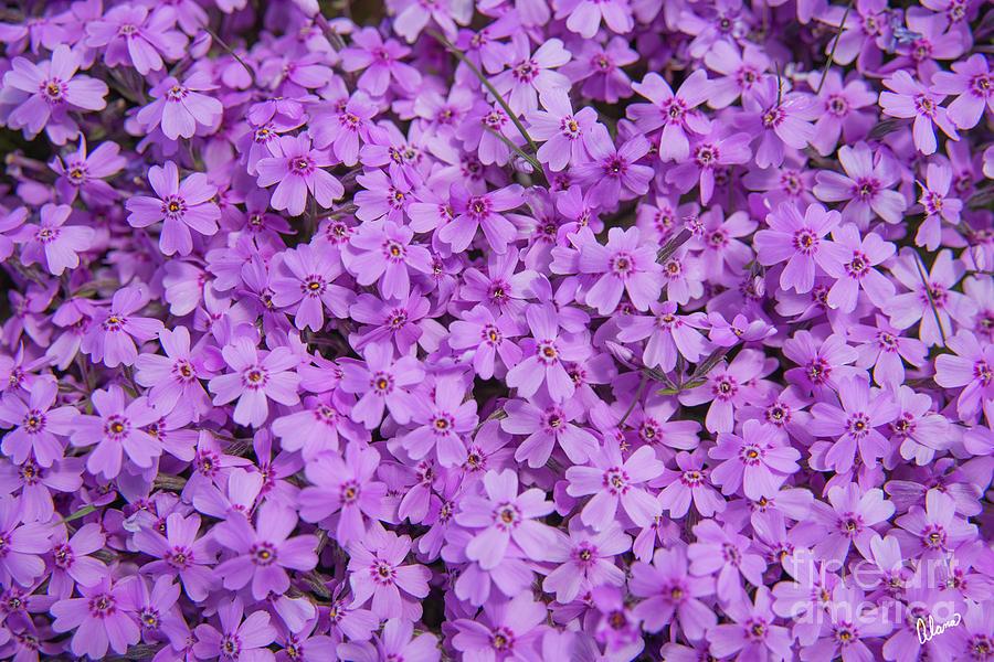 Jewel Of Spring Photograph