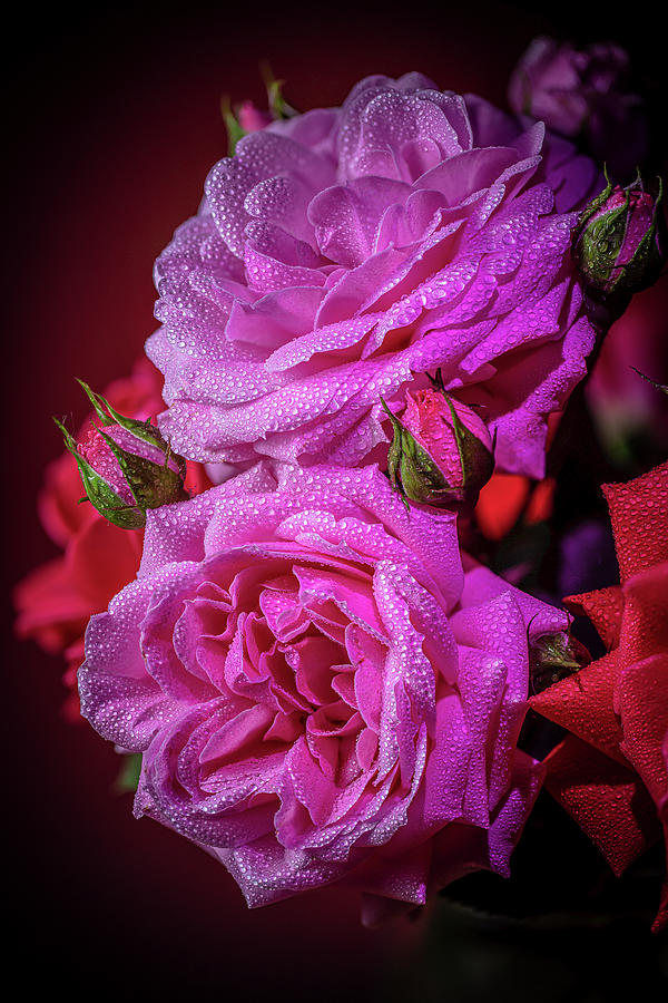 Jeweled roses by Fred J Lord