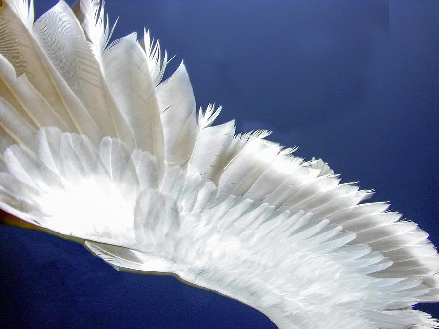 seagull wing in flight by David Shuler