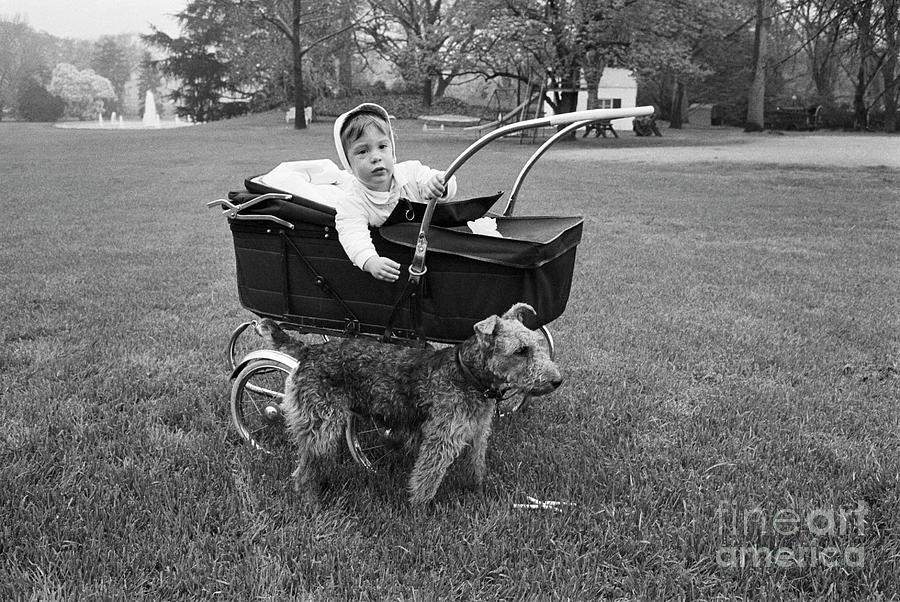John F. Kennedy Jr. In A Baby Carriage Photograph by Bettmann