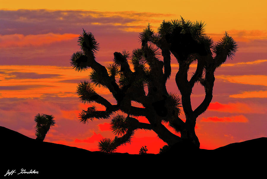Joshua Tree at Sunset by Jeff Goulden