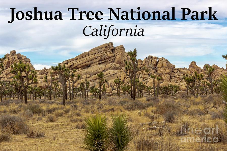 Joshua Tree National Park Photograph - Joshua Tree National Park, California 03 by G Matthew Laughton