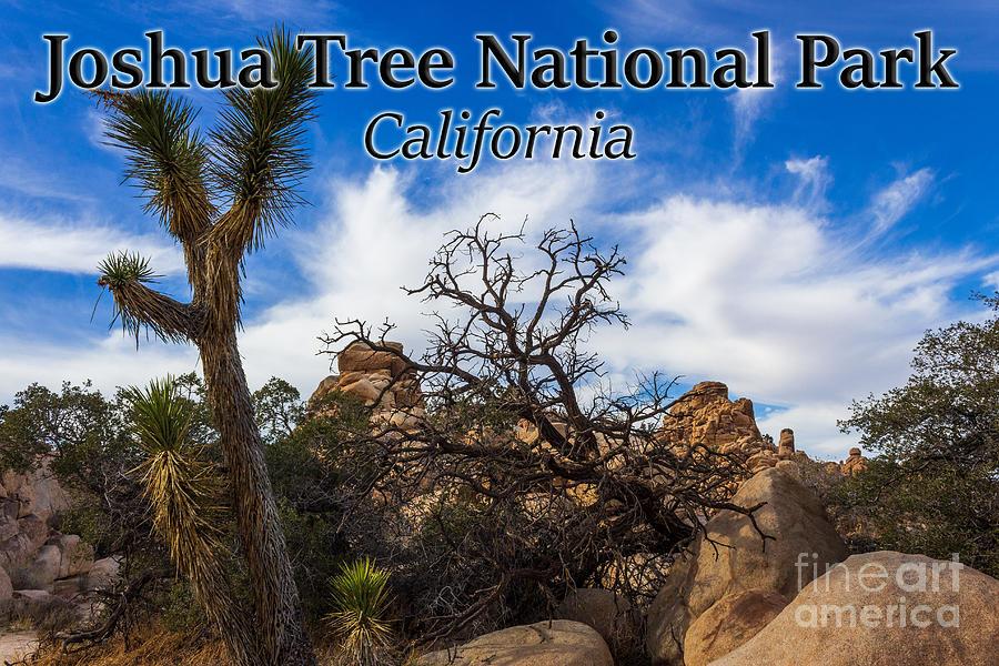 Joshua Tree National Park Photograph - Joshua Tree National Park, California Box Canyon 02 by G Matthew Laughton