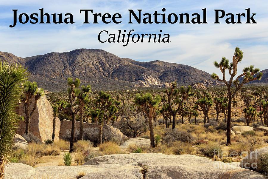 California Photograph - Joshua Tree National Park Valley, California by G Matthew Laughton