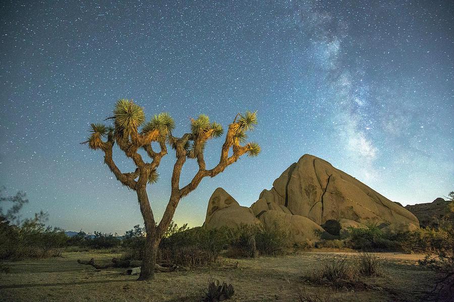 Joshua Tree Np Photograph
