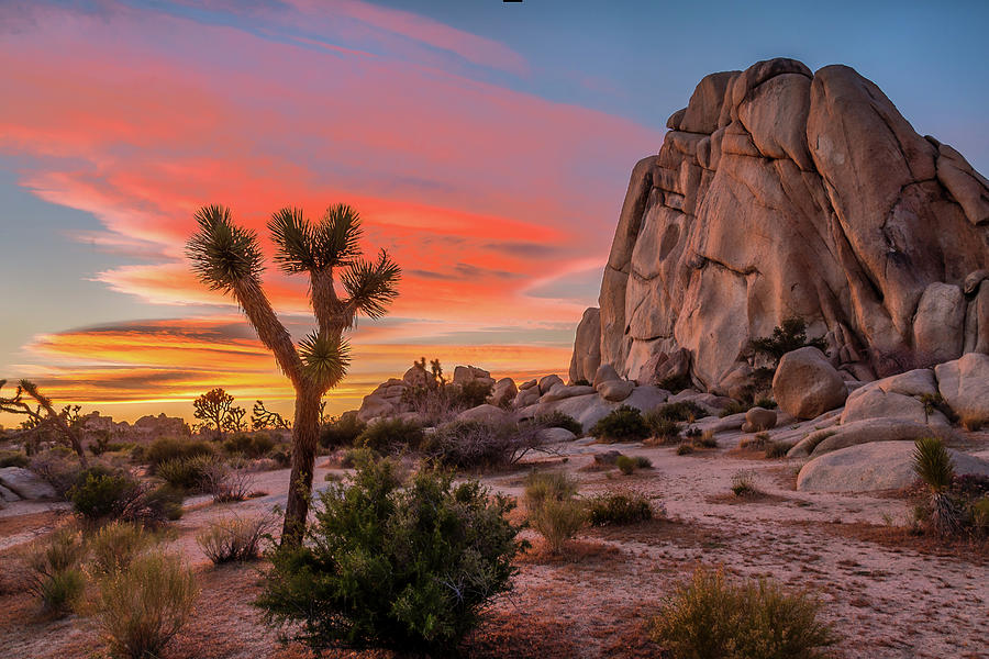 California Photograph - Joshua Tree Sunset by Peter Tellone