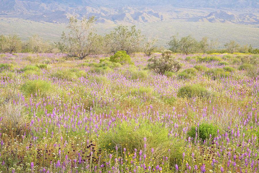 Joshua Tree - Vernal Meadow at Dusk by Alexander Kunz