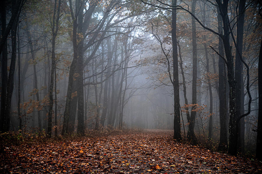Journey into the Mist by Kelly Kennon