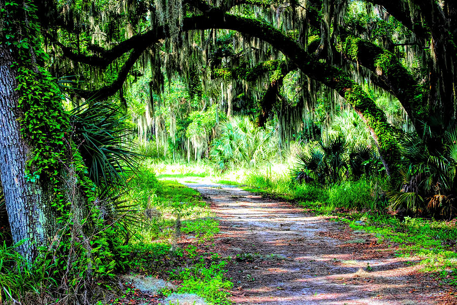 Journey Through the Live Oaks by Robert Stanhope