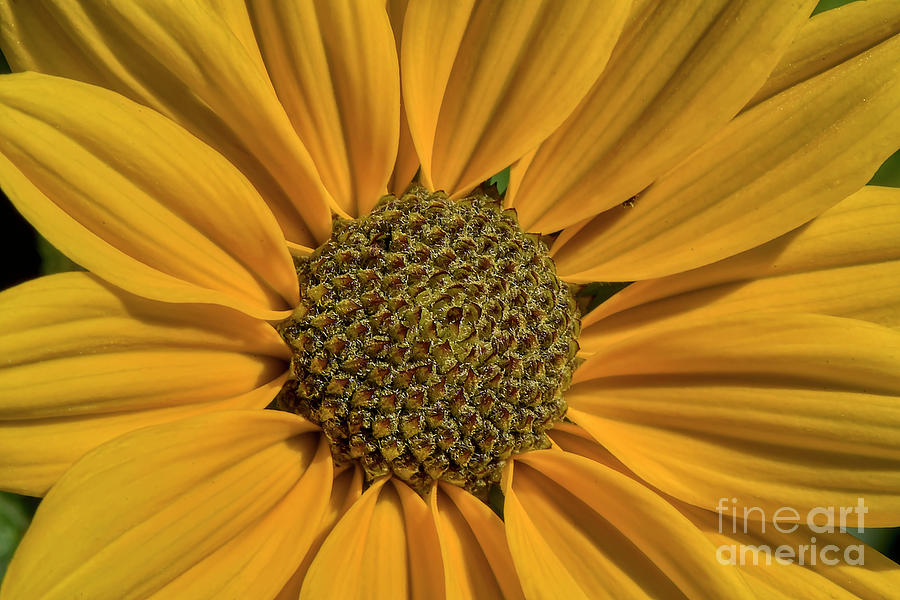Journey To The Center Of A Flower by Kathy Baccari
