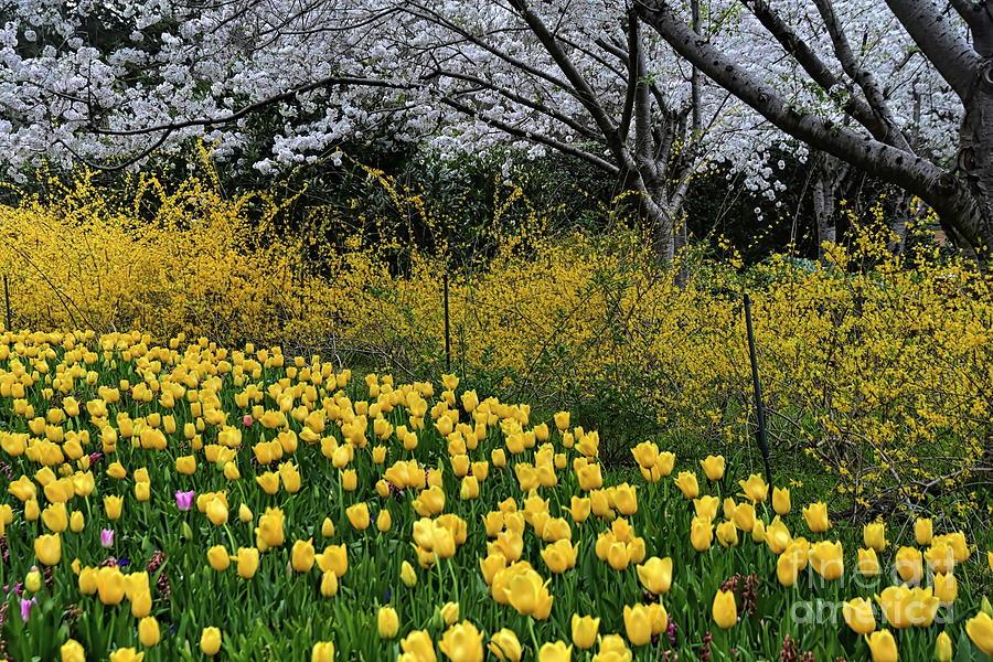 Joy of Spring by Diana Mary Sharpton