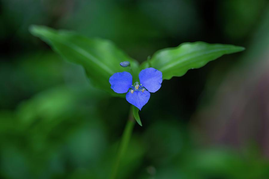 Flower Photograph - Joy To The World by Az Jackson
